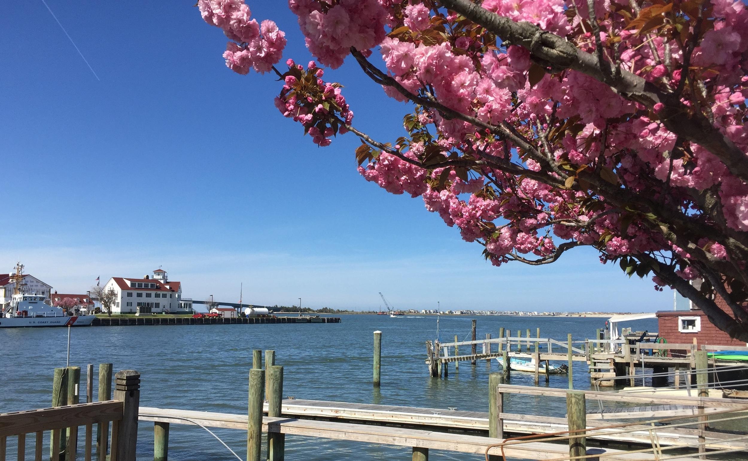 Kammerman's Marina in Atlantic City, NJ