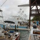 Abaco Shootout Sportfish Fishing Tournament